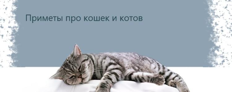 Приметы про кошек и котов — народные суеверия