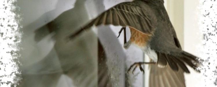 Птица стучит в окно — к чему примета и что она означает