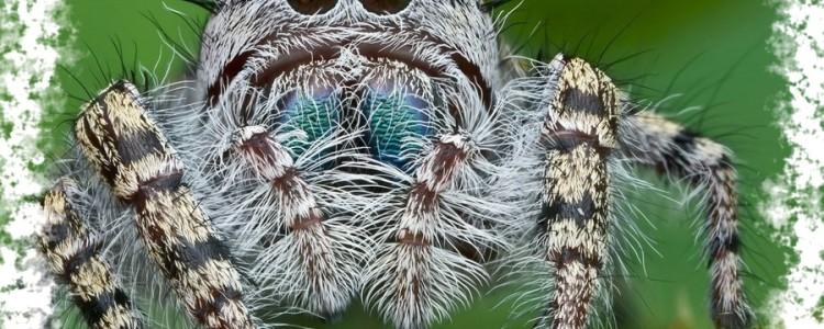 Уведеть паука — к чему эта прмета и какое её значение