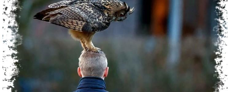 Птица села на голову — к чему примета и что она означает