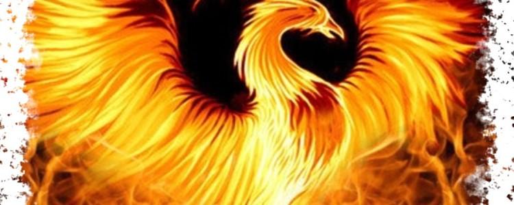 Птица Феникс — её значение в мифологии разных народов