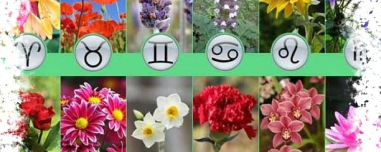 Растения по знаку Зодиака — цветочный гороскоп