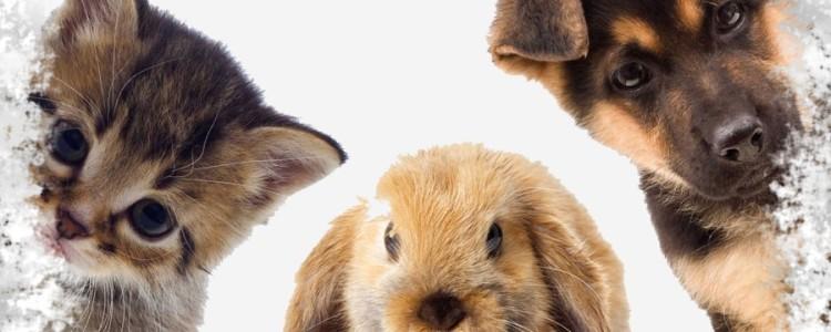 Приметы о животных — о погоде, семье и доме