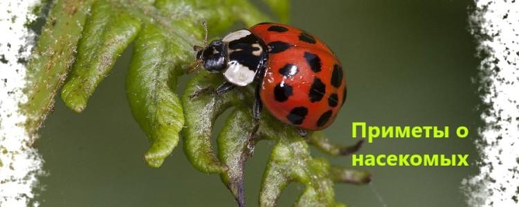 Приметы о насекомых — что значит, если насекомое залетело в окно