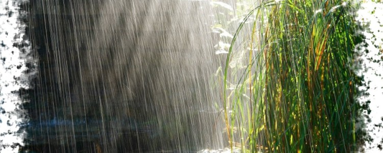 Народные приметы о дожде — мудрость предков