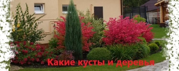Какие кусты и деревья возле дома нельзя сажать, а какие можно