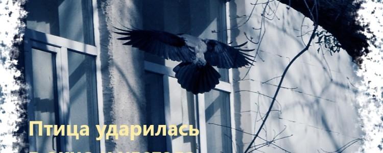 Птица ударилась в окно и улетела — что значит примета