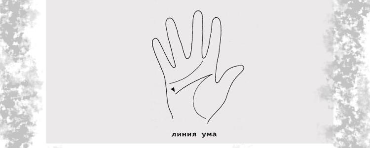 Линия ума на руке — её значение и полная расшифровка