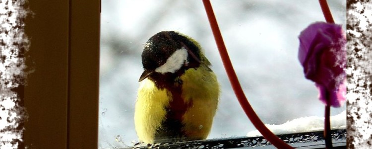 Птица на подоконнике — приметы и суеверия о птицах за окном
