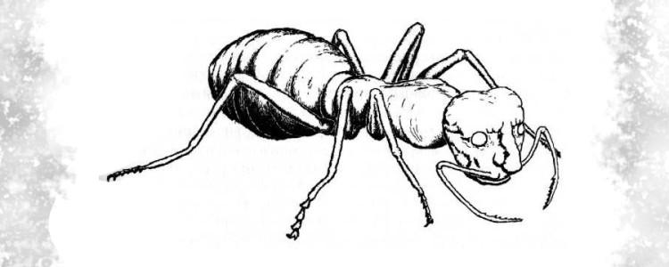 Мурианы — муравьи-оборотни корнуоллском фольклоре