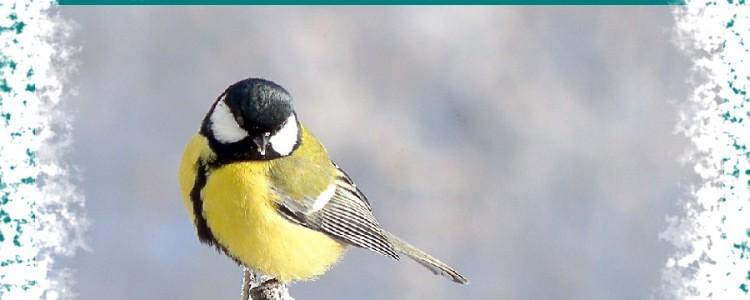 Приметы про птиц — народные суеверия и легенды