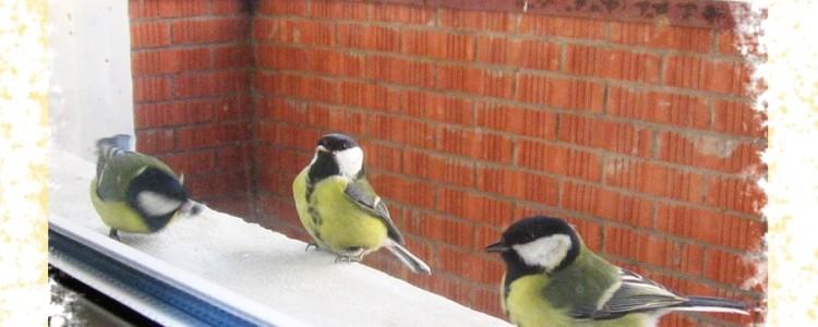 Птица залетела на балкон — к чему приметы и что они означает