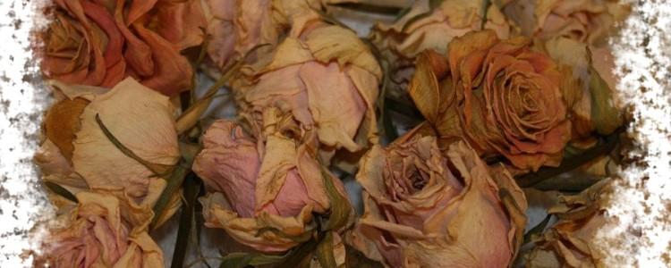 Неживые цветы дома — можно ли их ставить или держать в доме