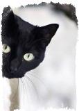 Приметы про цветных котов
