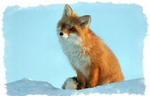 Чертог лисы — описание