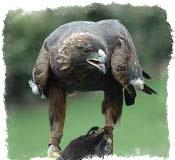 Чертог орла — значение