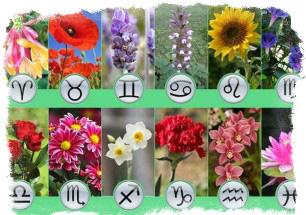 Цветы и растения по знаку Зодиака