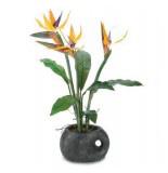 Домашние цветы по знаку Зодиака — Стрелец