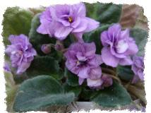 Растения по знаку Зодиака для Тельца