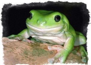 примета увидеть лягушку