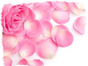 Как узнать есть ли венец безбрачия на женщине с помощью лепестков роз