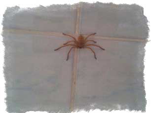 Примета — паук спускается вниз по стене