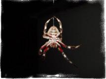 паук ползет вниз примета