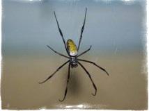Народные приметы — увидеть паука