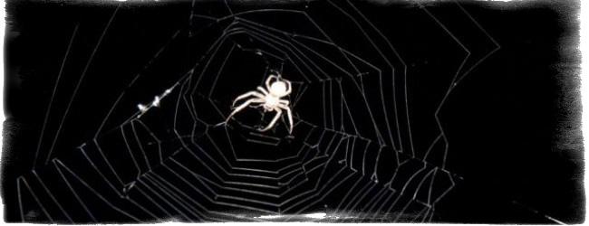 Что значит, если увидеть паука вечером или ночью