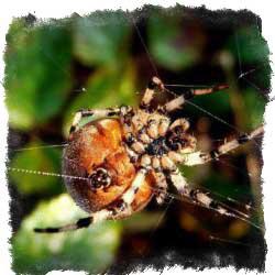 Увидеть паука утром или днем - значение примет