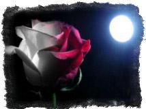 Ритуал на привлечение любви с розой