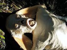 Существуют ли русалки на самом деле в реальной жизни