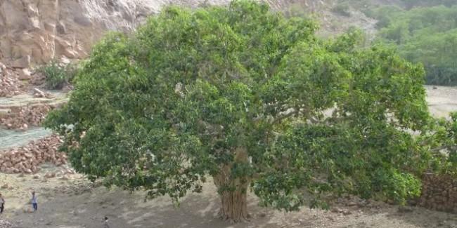 Древо жизни — символ и его значение