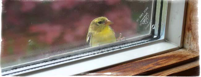 птица в окно стучится примета