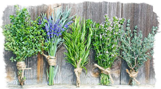 Травы-обереги — как ими пользоваться