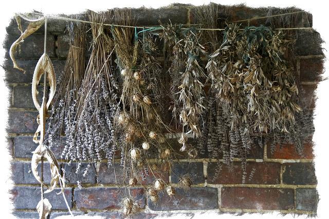 Растения-обереги от негатива