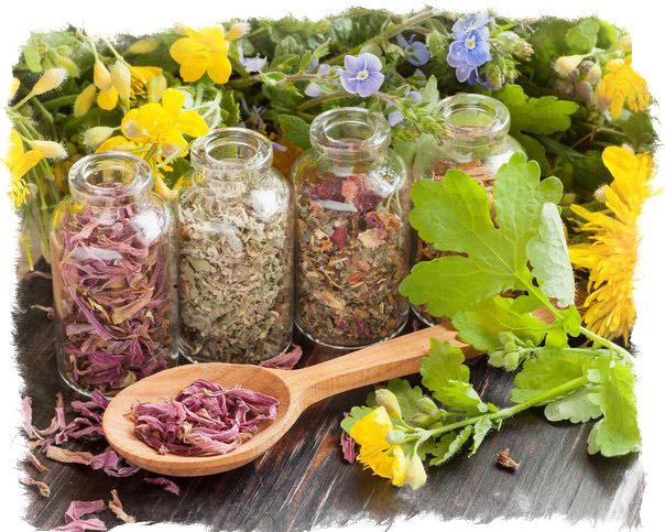 Как травами привлечь положительную энергию в дом