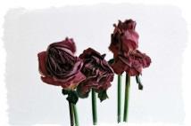 Неживые цветы дома - приметы