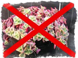 Можно ли держать в доме искусственные цветы