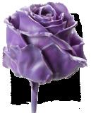Приметы и поверья про восковые цветы