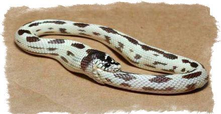 Змея ест сама себя — верования древних народов
